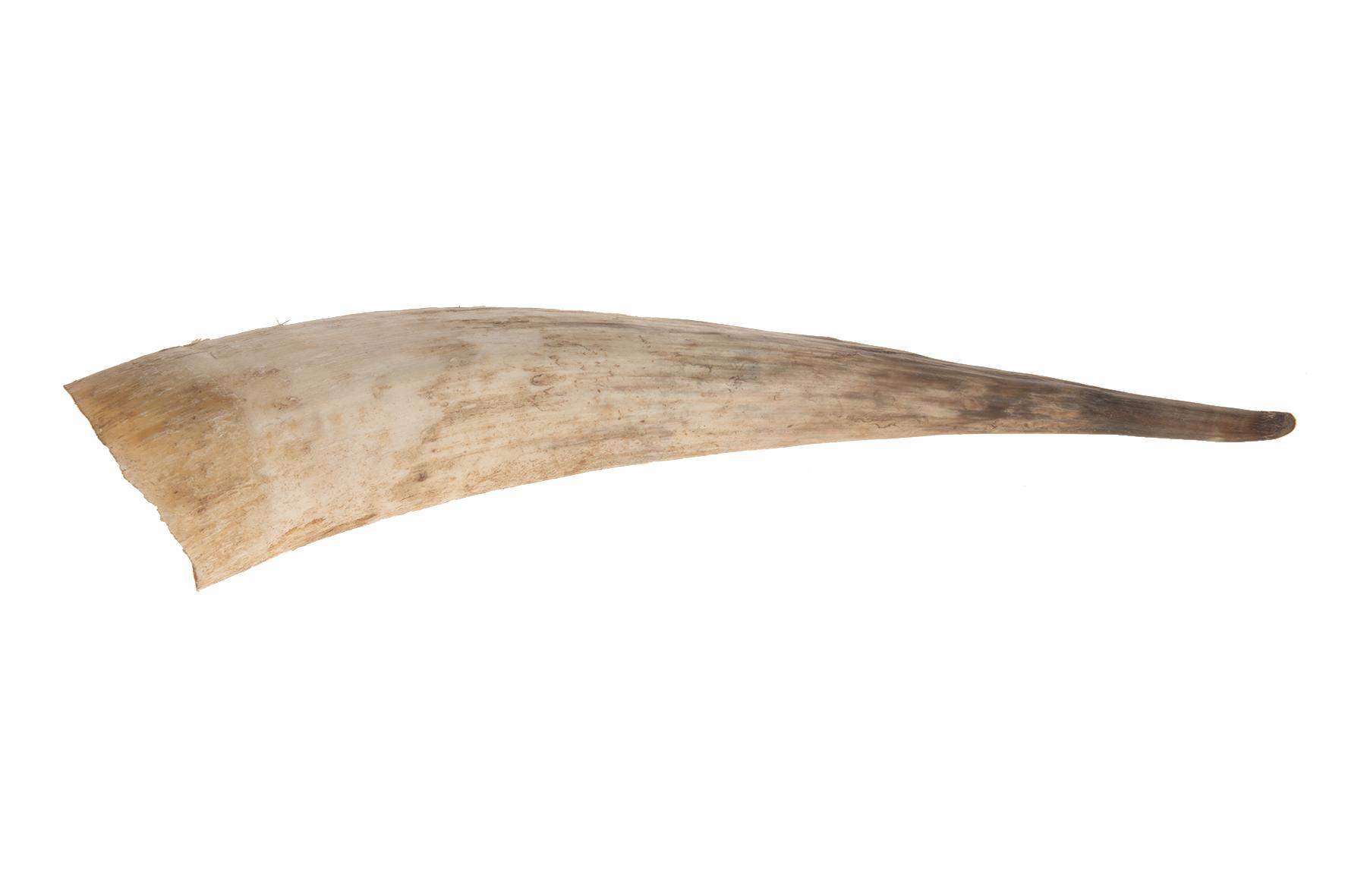 Afbeelding van Dijk Natural Collections Koehoorn xl 35x55cm