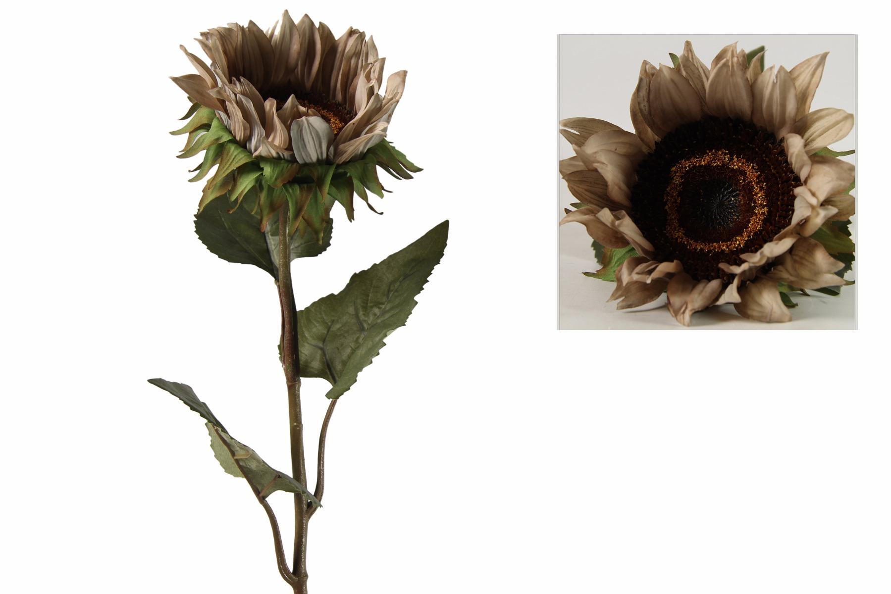 Afbeelding van Countryfield helianthus annuus floria grijs