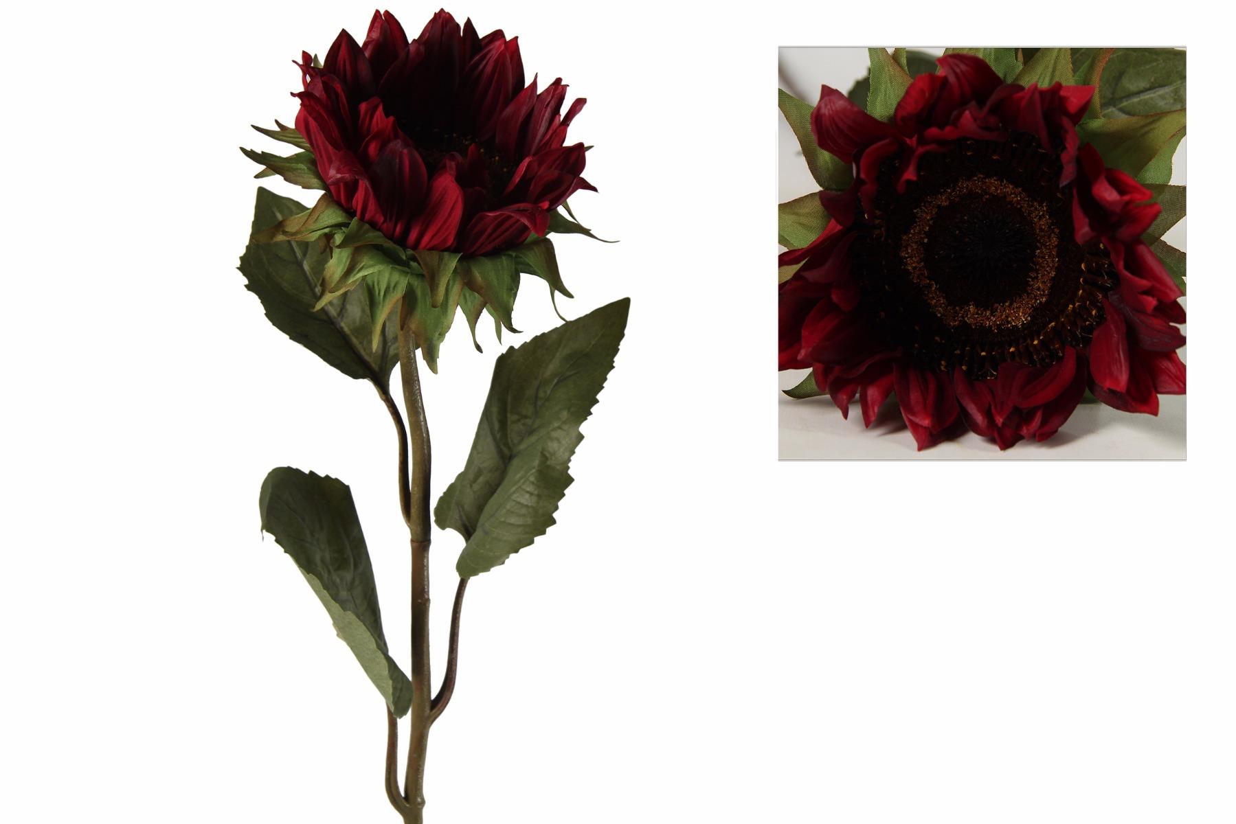 Afbeelding van Countryfield helianthus annuus floria rood
