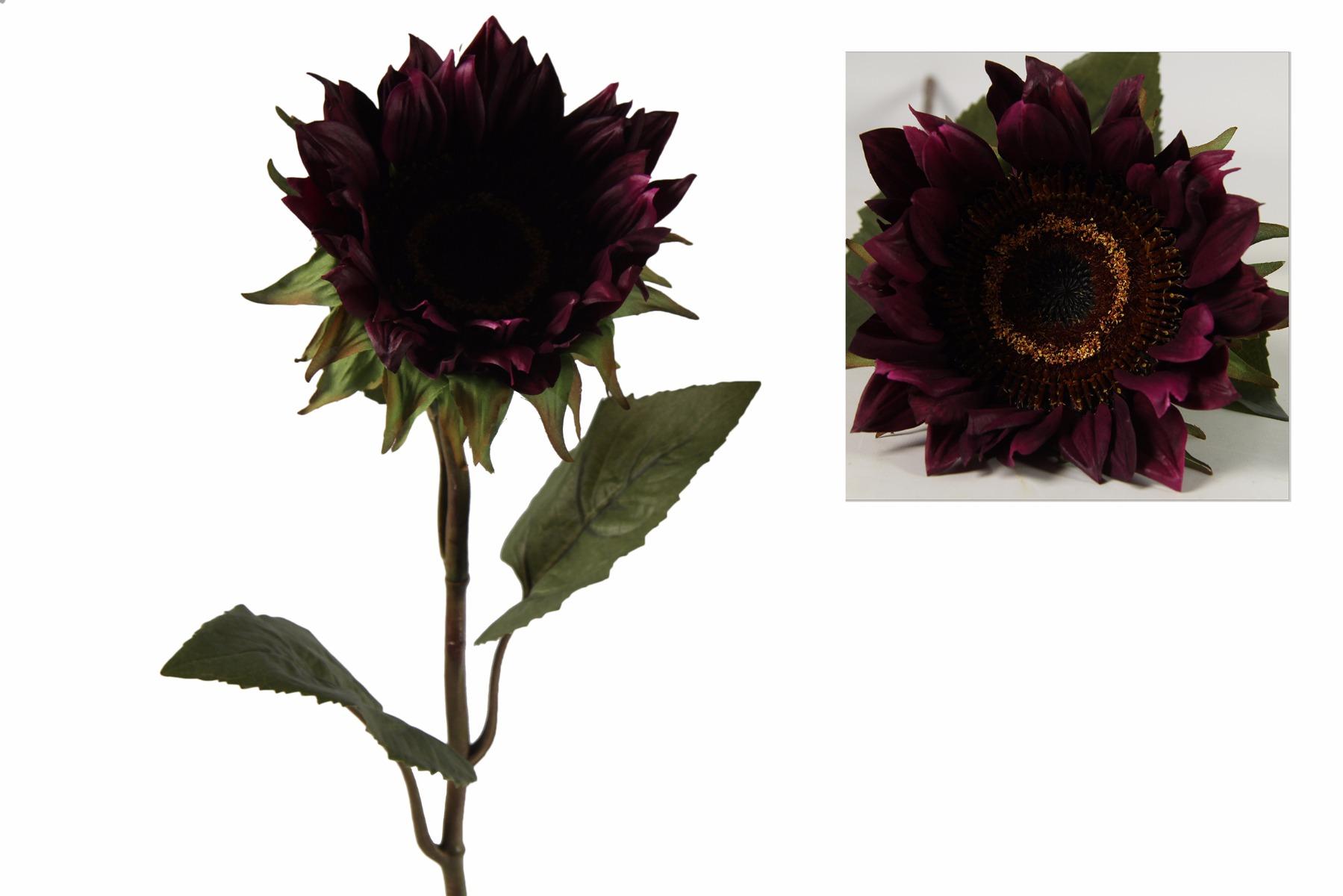 Afbeelding van Countryfield helianthus annuus floria paars