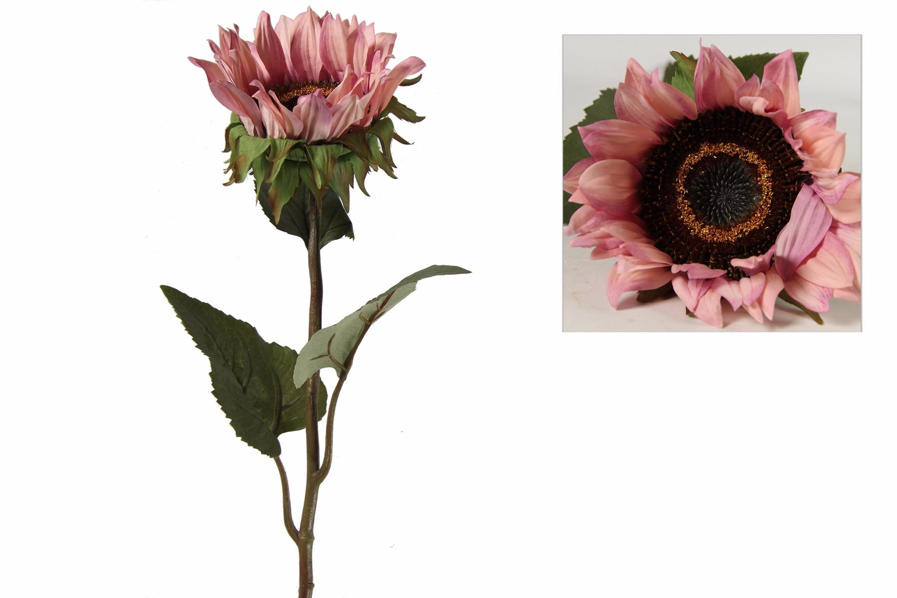Afbeelding van Countryfield helianthus annuus floria roze