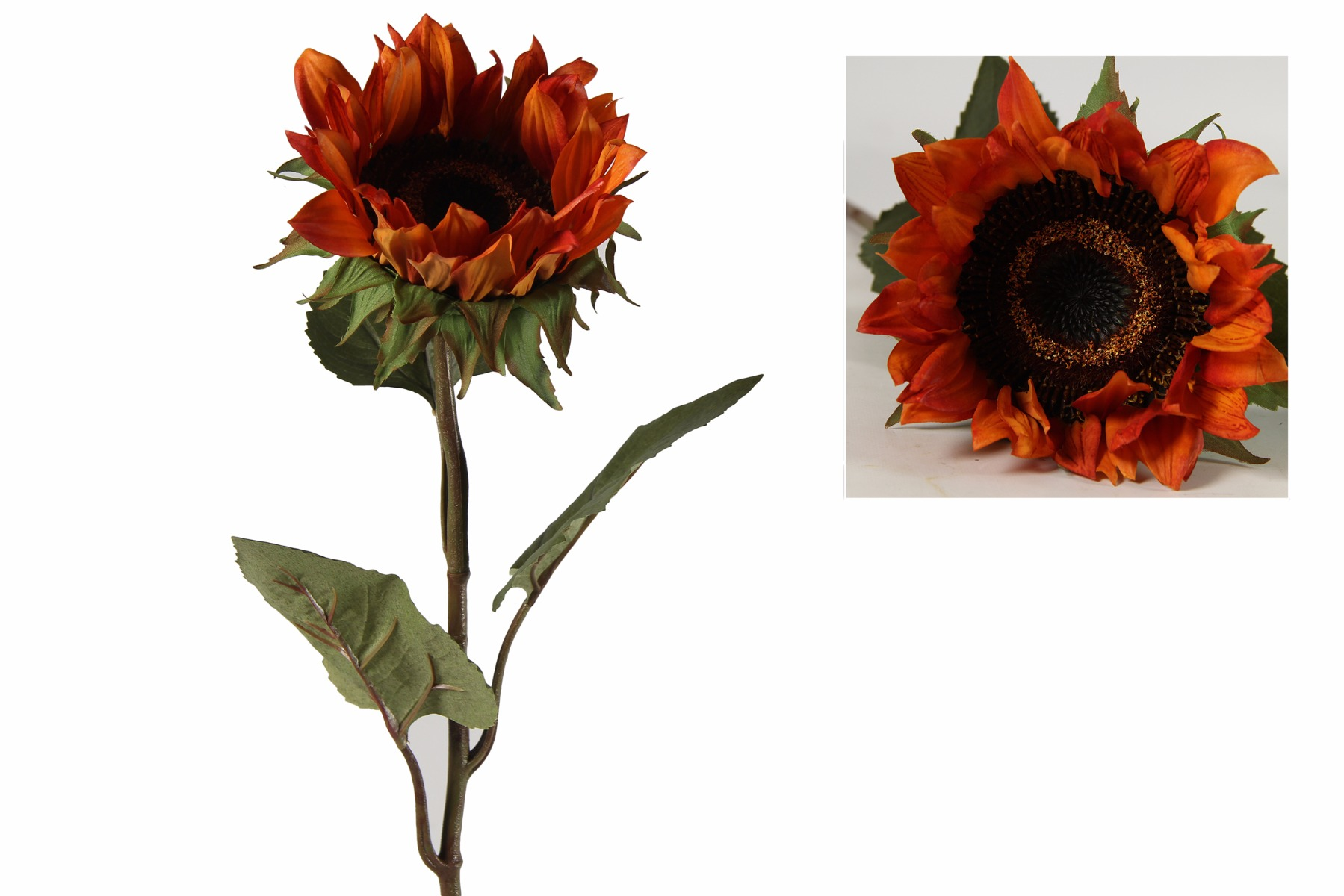 Afbeelding van Countryfield helianthus annuus floria oranje