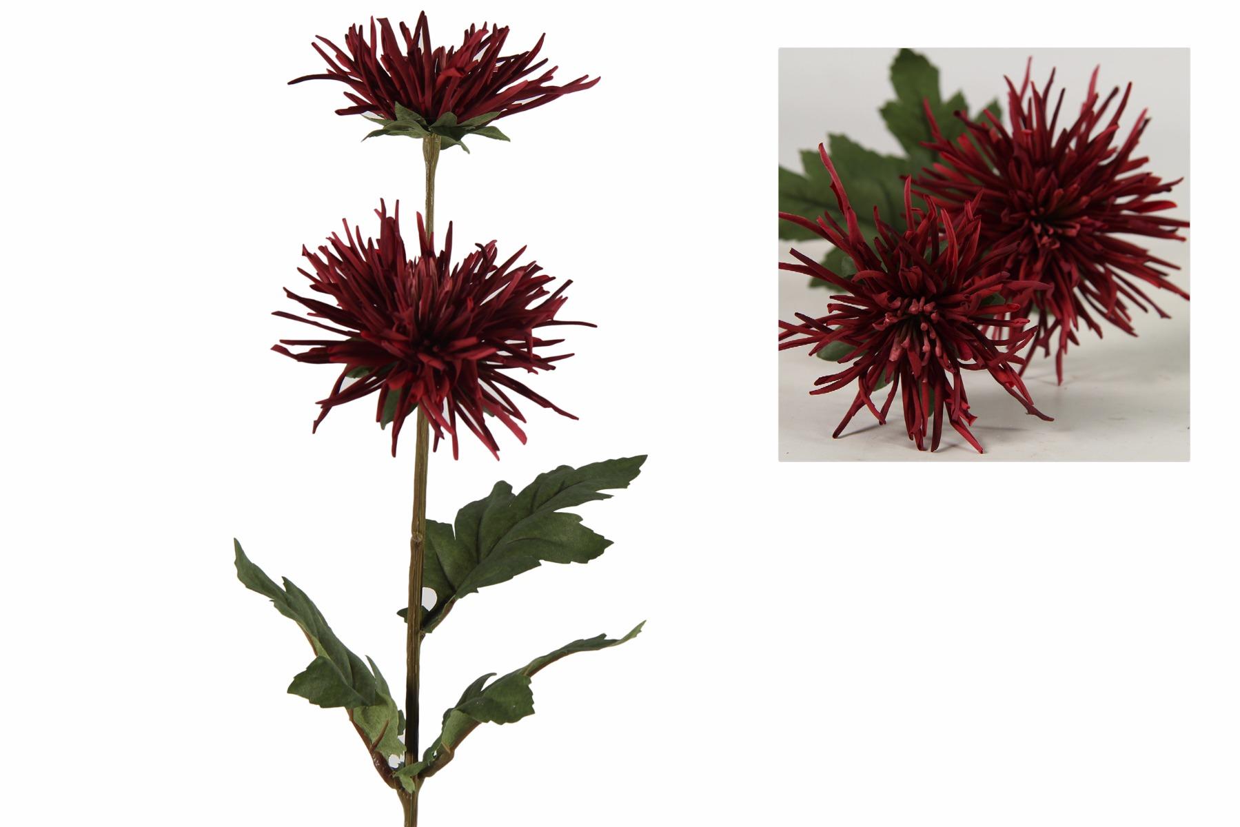 Afbeelding van Countryfield chrysanthemum iona rood