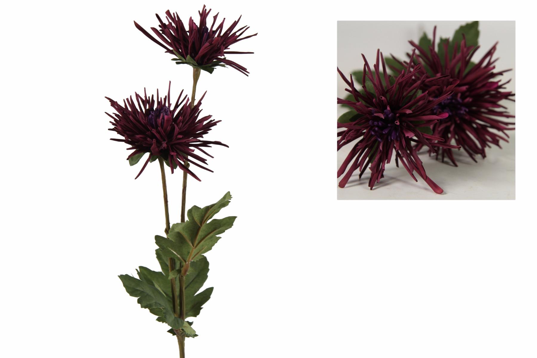 Afbeelding van Countryfield chrysanthemum iona paars