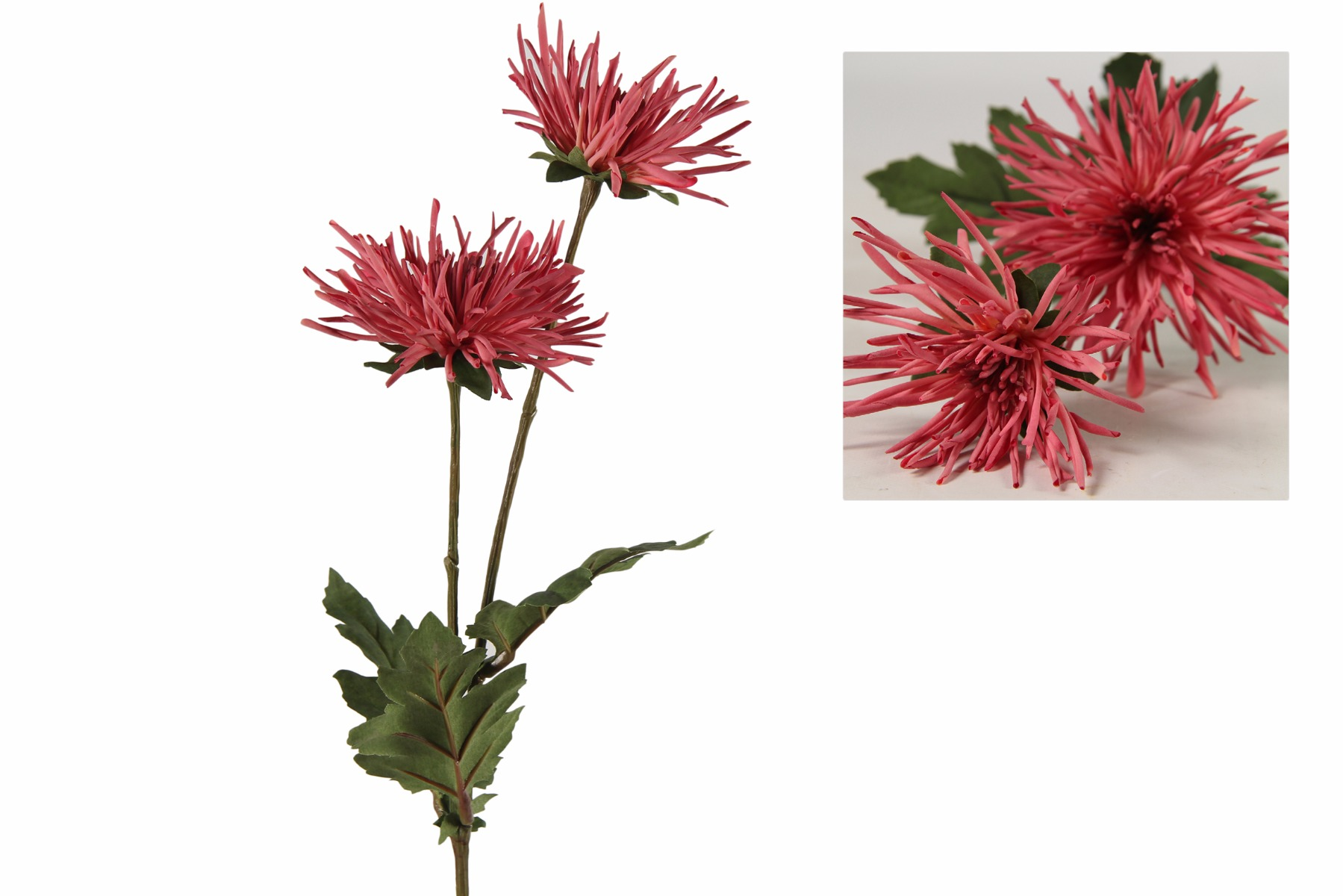 Afbeelding van Countryfield chrysanthemum iona fuchsia