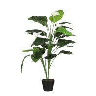 Mica Spathiphyllum In Pot H120xD60cm