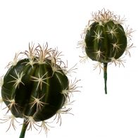 PTMD CACTUS PLANT GROEN ROND